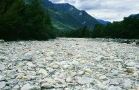 Trockengelegter Flussabschnitt der Maggia (© Herbert Maeder)
